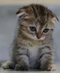 sad_kitten.jpeg?filter=feature&w=600&h=250